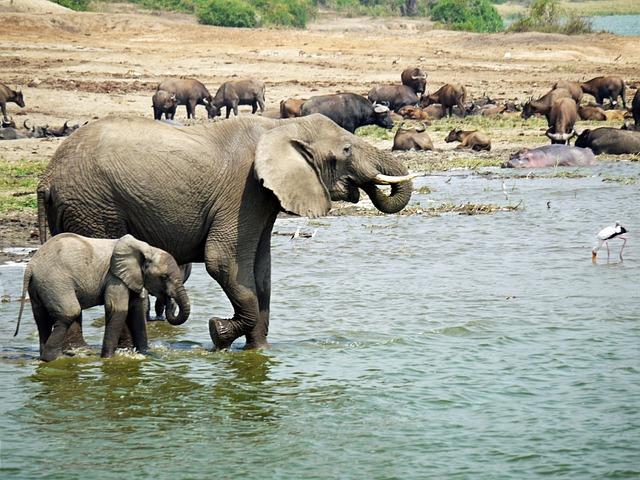 L phant ouganda la joie photo gratuite sur pixabay - Images d animaux sauvages gratuites ...