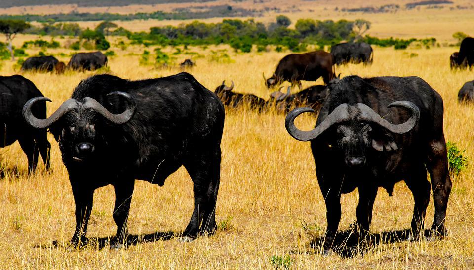 La Faune, Afrique, Tanzanie, Mammifères, Safari, Parc