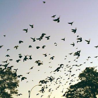 Libertad, La Justicia, La Paz, Aves