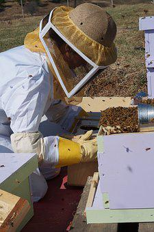 Farming, Beekeeping, Bees, Honey