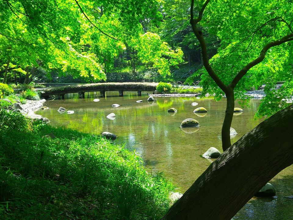 Tokyo, Japanese, Garden, Pond, Green, Summer