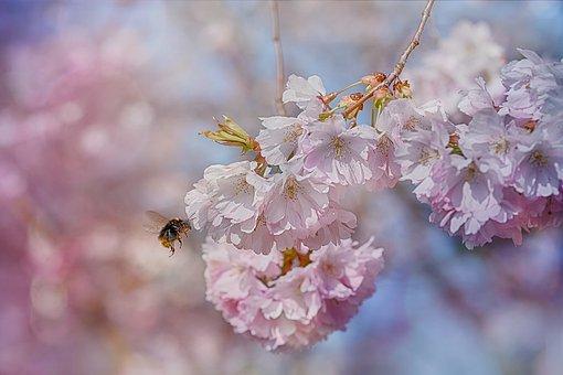 miel des jardins de la menoge