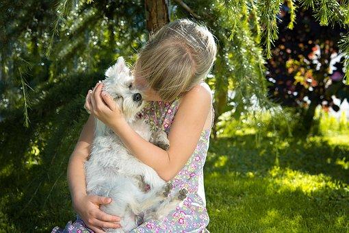 子, 女の子, 犬, 小型犬, 白, 愛, 寄り添う, キス, 友人, 信頼