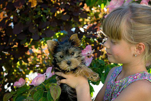 Child, Girl, Blond, Dog, Puppy