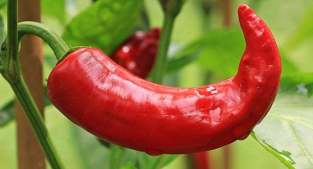 Pepperoni, Paprika, Nachtschattengewächs
