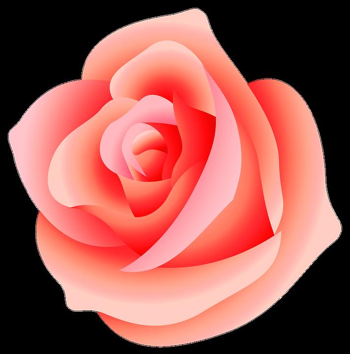 Rose Fleur Nature Image Gratuite Sur Pixabay