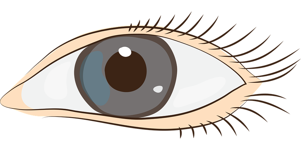 Free vector graphic: Eyes, Sight, Face, Clip Art - Free Image on ...