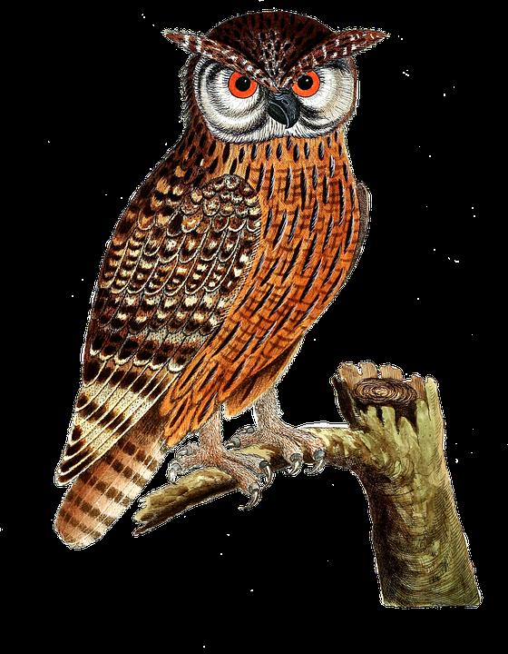 Búho Real Aves Ave De Imagen Gratis En Pixabay