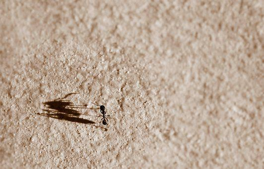 Ant, Shadow, Big, Small, Metaphor