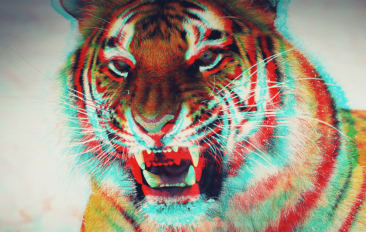 Крутые картинки тигры, надписями про любовь