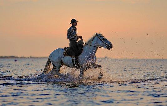 Jumper, Horse, Horses, Horseback Riding