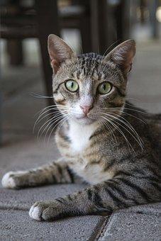 Cat, Kitten, Kitty, Feline, Domestic
