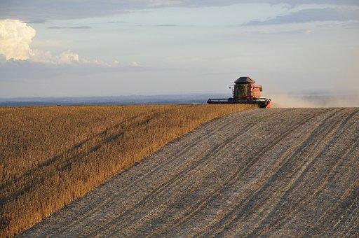 Harvest, Soybeans, Plantation