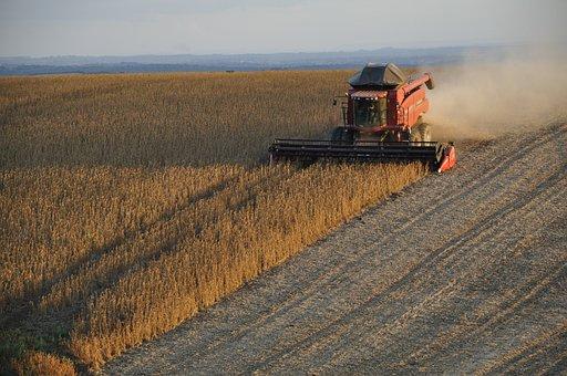 В Липецкой области завершается уборка зерновых, намолочено 3 млн тонн при урожайности 42,9 ц/га