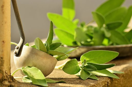 Salvia, Yrtit, Kulinaarisia Yrttejä