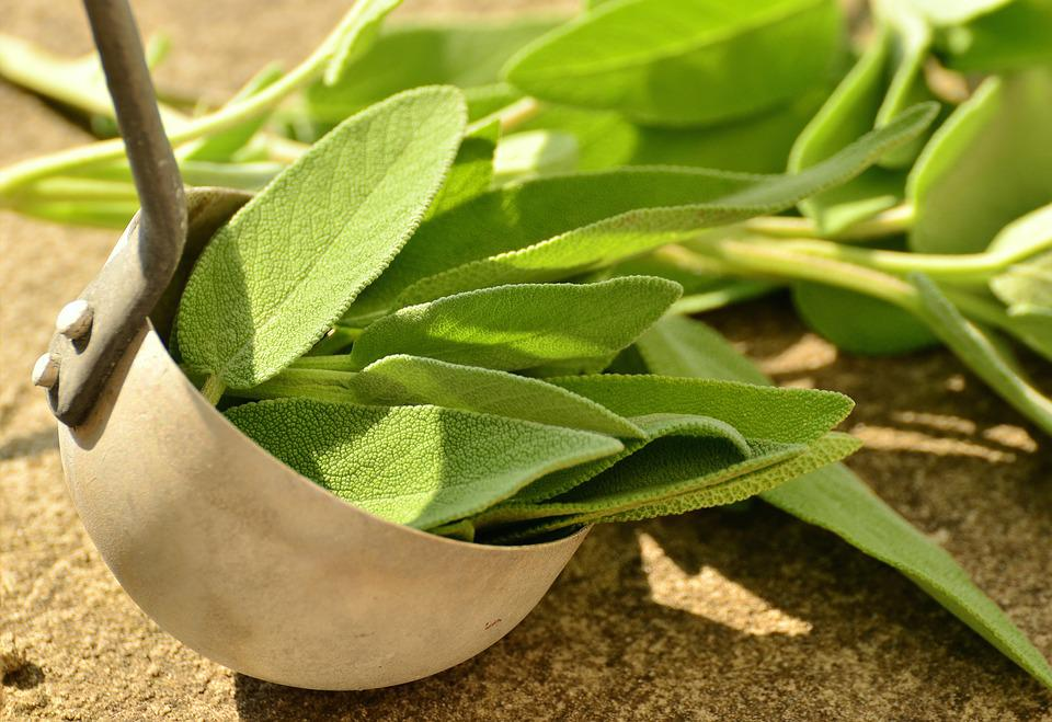 Sage Herbs Culinary - Free photo on Pixabay