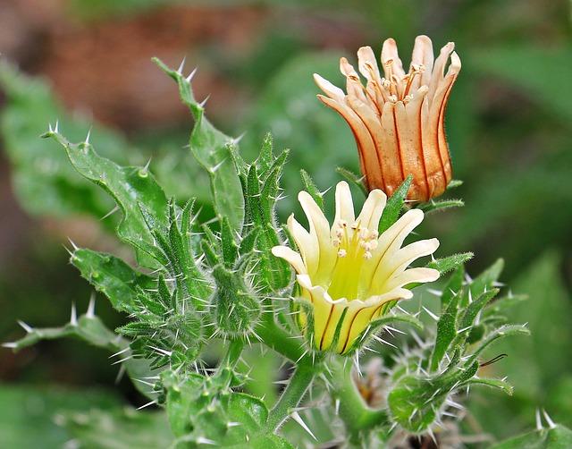 free photo  cactus flowers  flowers  plant
