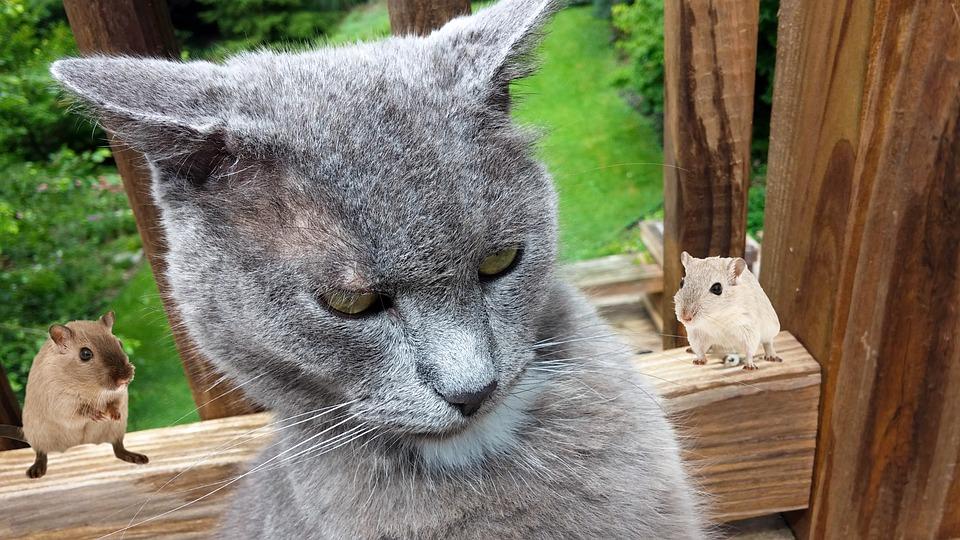 Gambar Kucing Dan Tikus godean.web.id