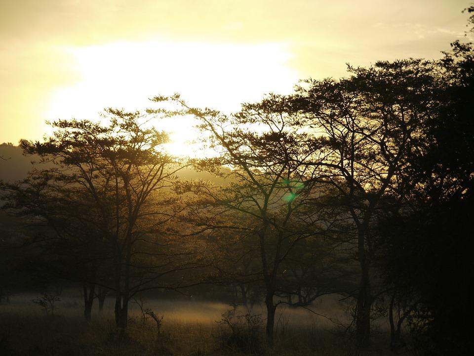 Akazienwald, Morgenstimmung, Uganda, Bodennebel