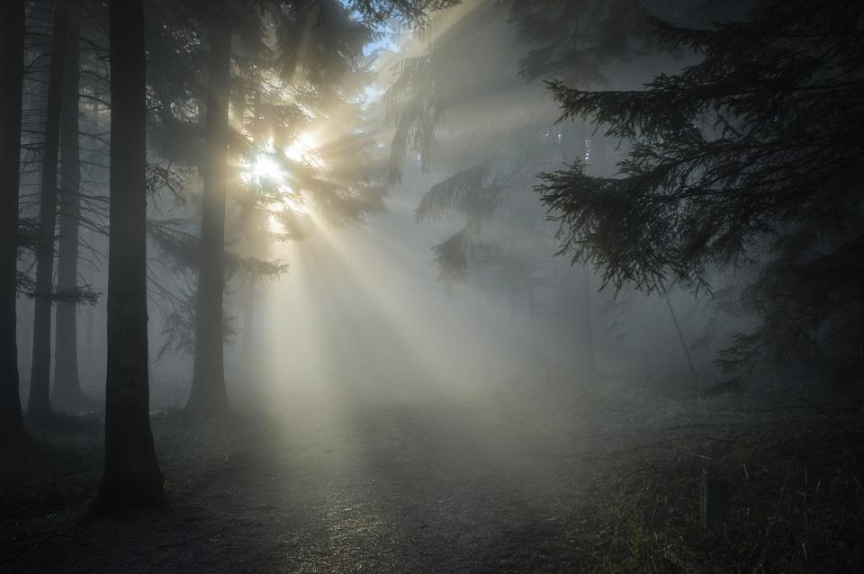 太陽光線, 森林, 霧, 木, 林, 森, 日光, 朝, 朝霧, 朝の霧, ヘイズ, 太陽, バックライト