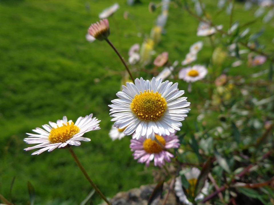 Blume Weiß Gelb · Kostenloses Foto auf Pixabay
