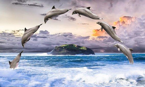dolphin marine mammals pinball jump meeres - Dolphin Pics