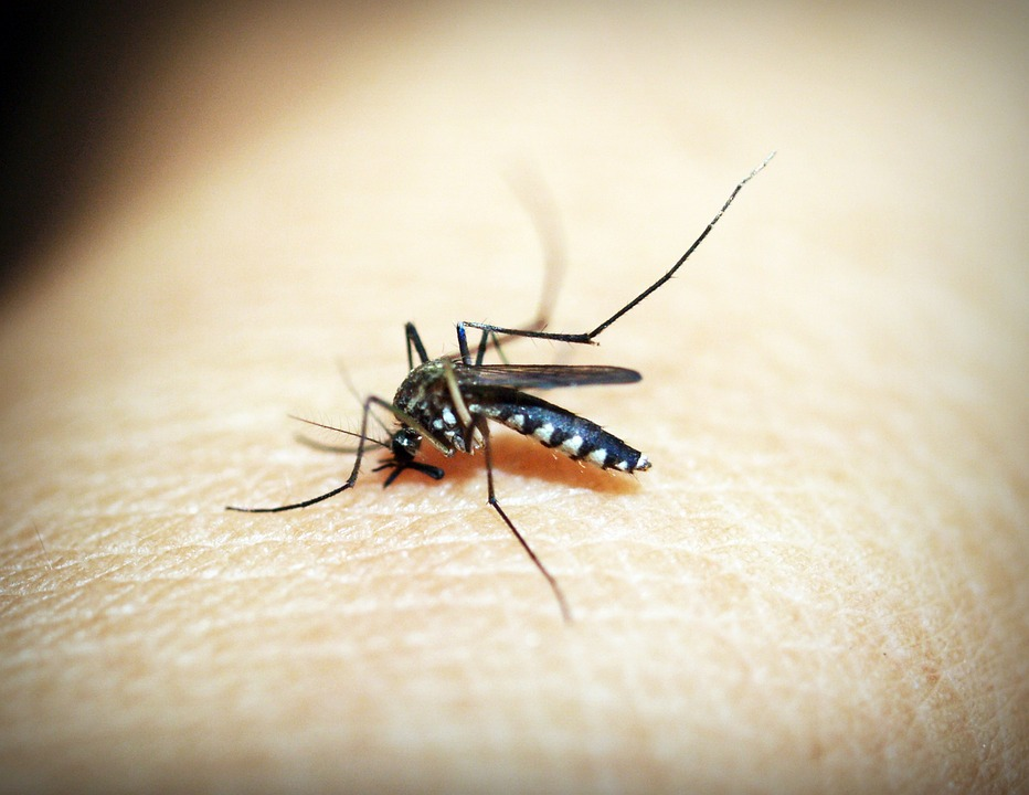What Is Malaria & What Can Be Done If I Contract Malaria?
