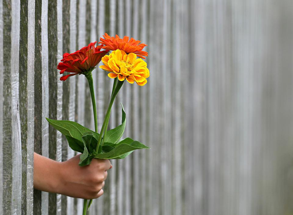 Hand, Gift, Bouquet, Congratulation, Love, Give, Fence