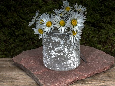 Blumen, Stillleben, Gänseblümchen