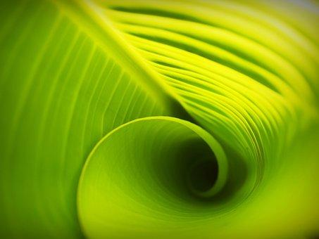 Quel est le type d'énergie produite par la photosynthèse ?