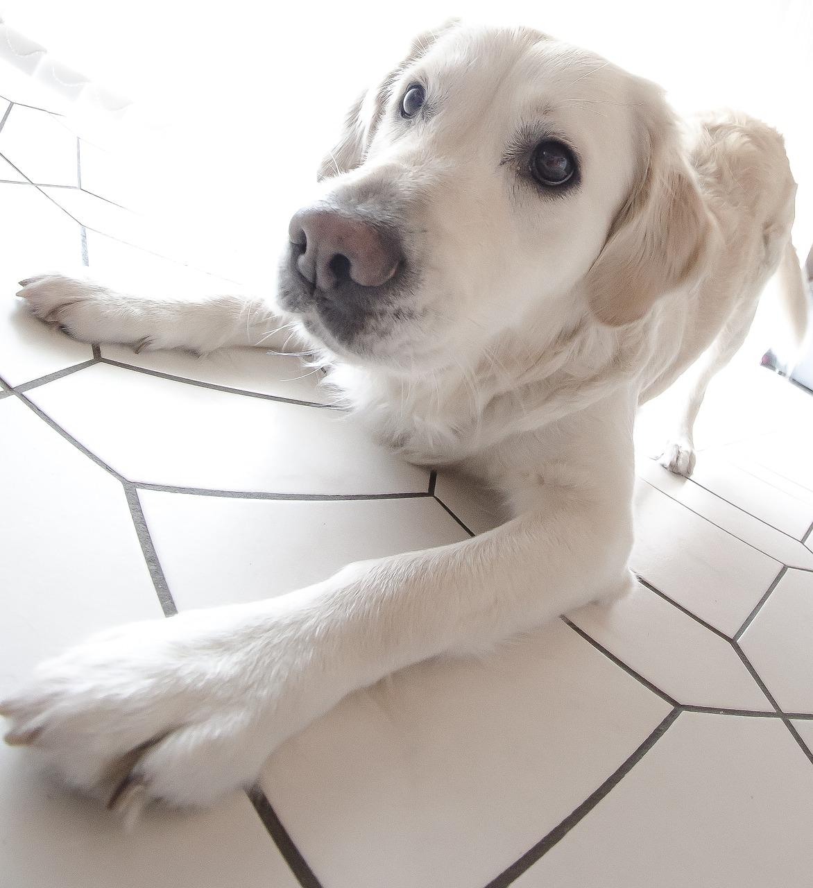 Hund Fisheye Porträt