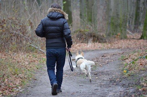 Leisure, Pet Photography, Dog, Dog Runs