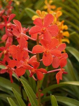 Orchid, Flower, Bright, Violet, Flora