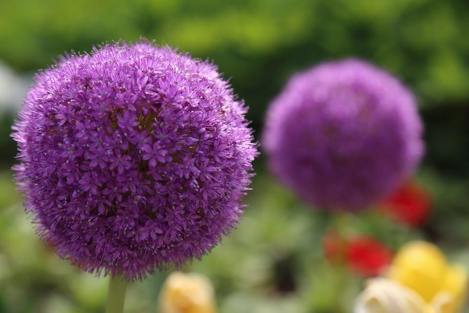 Flores Plantas Flor De Rosa Uma Foto Gratuita No Pixabay
