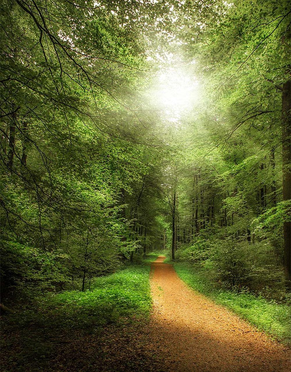 Лес прекрасный картинки