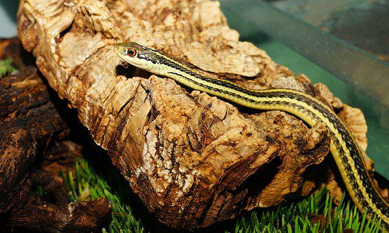 Snake, Young Animal, Cute, Slim, Reptile