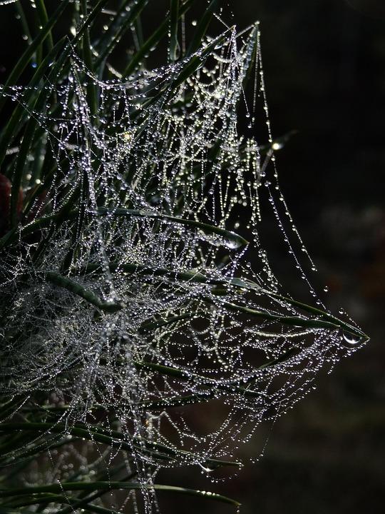 Pajęczyna, Pająk Sieci Web, Rosa, Dewdrop, Morgentau