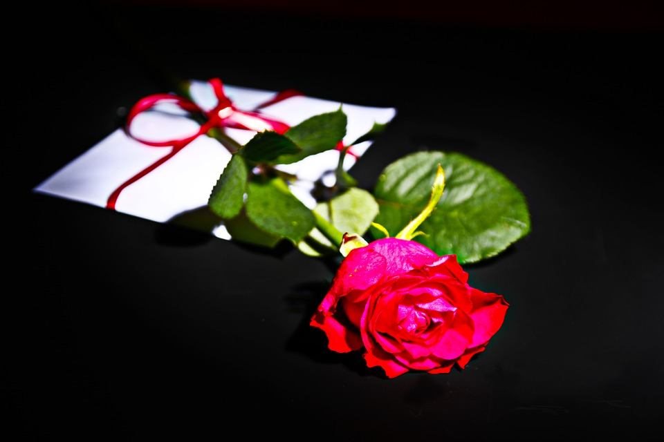 rose letters love letter write white red