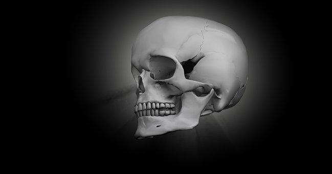 Adult Content SafeSearch Skull, Bone, Head, Skeleton, 3D-Model