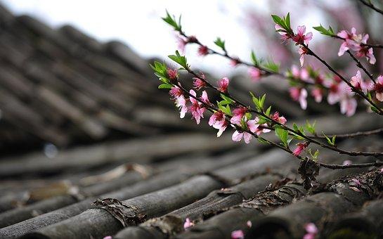 桃の花, 春, Diaojiaolou, 屋根