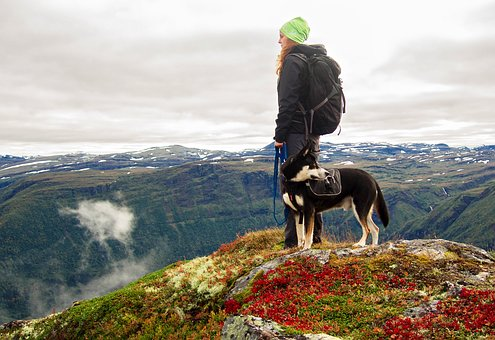 Dog, Mountains, Hiking, Norway