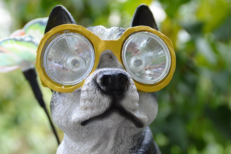 Diving Mask Dog Swimming - Free photo on Pixabay