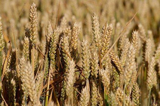 В Росстате сообщили о росте цен на крупы и бобовые