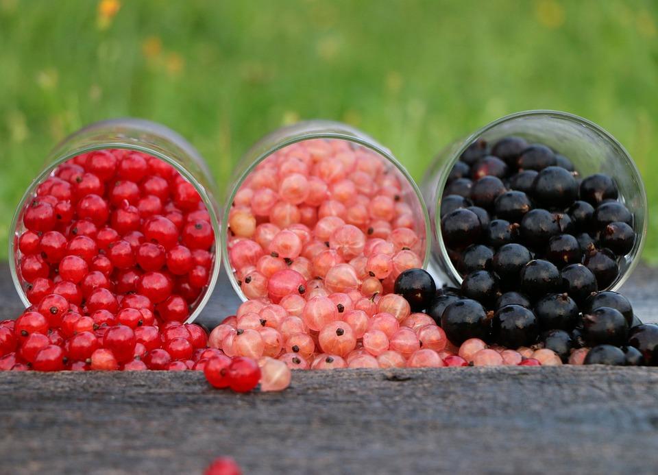 Ribes, Grado, Vetro, Rosso, Nero, Tre, Luminoso, Berry