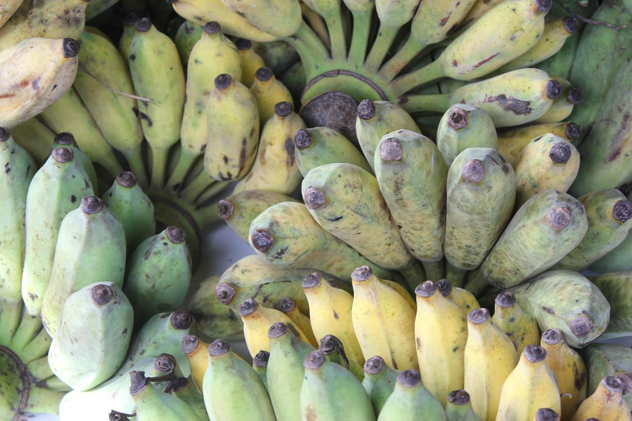 практически все живой банан фото этой яблони характерны