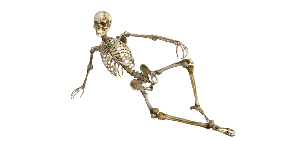 Skeleton Bones Anatomy Free Image On Pixabay