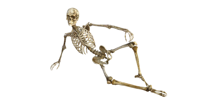 Human Skeleton Images · Pixabay · Download Free Pictures