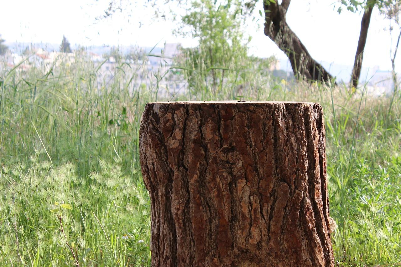 является картинка деревья пенечки кадры