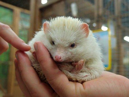 Zoo, Petting Zoo, Animals, Mini Zoo