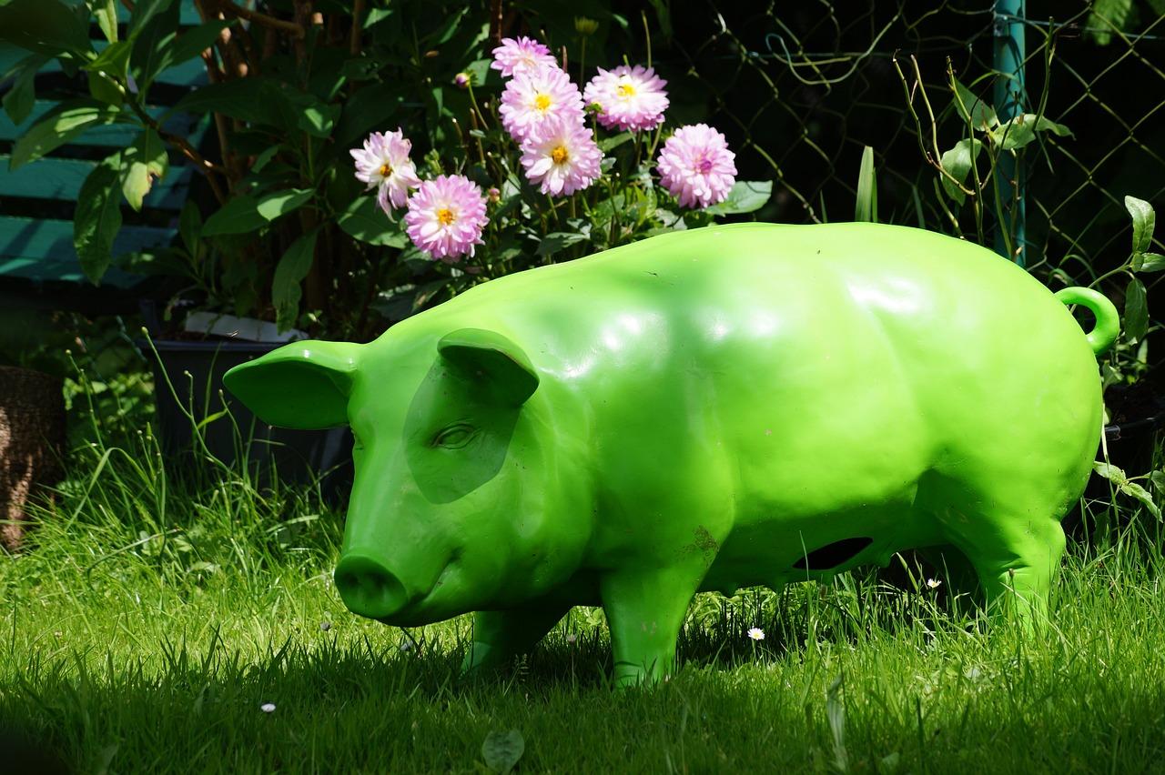 свинья травяная фото изучили фотохронику первых